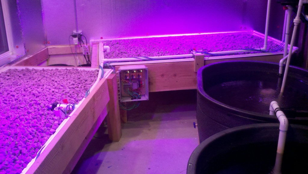 grow beds under red light